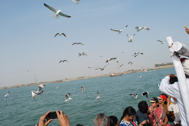 cranes at bet dwarka