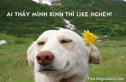 Chú chó gắn hoa