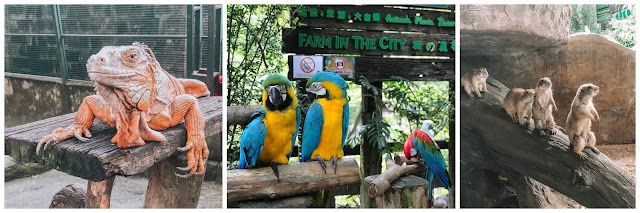 burung kakak tua show Farm In The City