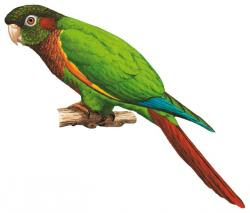 endangered birds Colombia