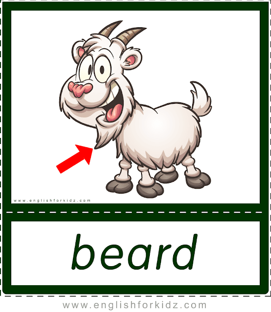 Beard (goat) - printable animal body parts flashcards for English learners
