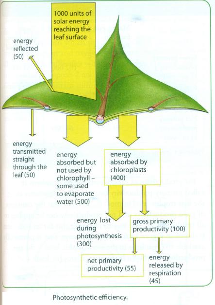 65 Ecology
