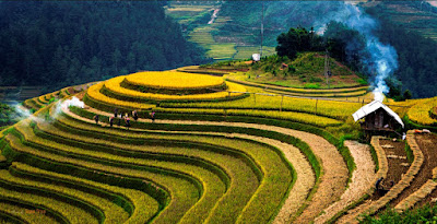 terraced fields in Ha Giang