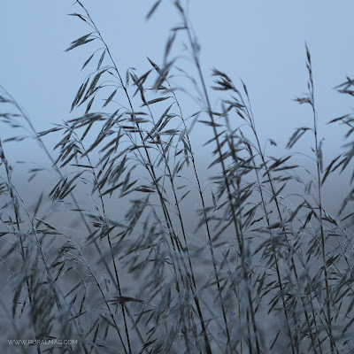 frosty grasses www.ruralmag.com