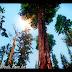 INSANITY Vegetation (vegetação em HD)