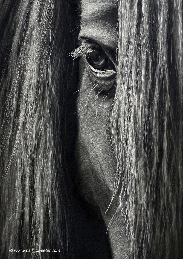 05-Black-Horse-Cathy-Sheeter-Wildlife-Scratchboard-Drawings-www-designstack-co