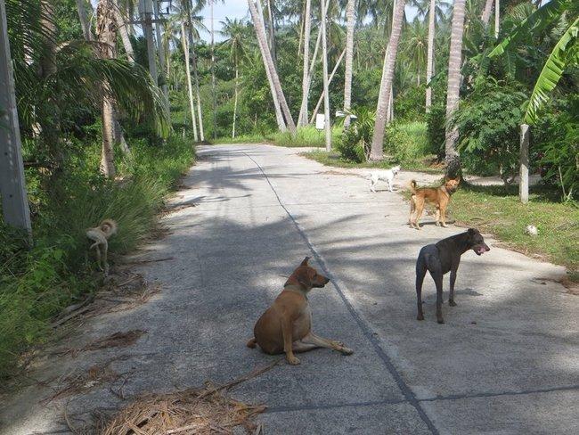 собаки разворачиваются после угощения