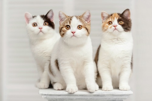 IDEXX photo of three cats