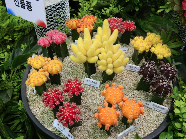 colorful cactii