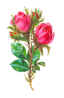 Rose Image Digital Flower Clip Art