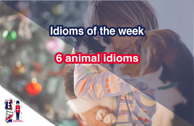 six animal idoms that could be used in the daily conversations.