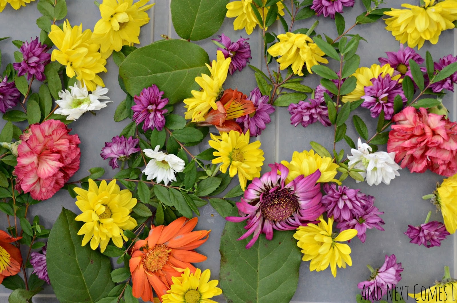 How to reuse fresh flowers for play and learning with toddlers and preschoolers from And Next Comes L