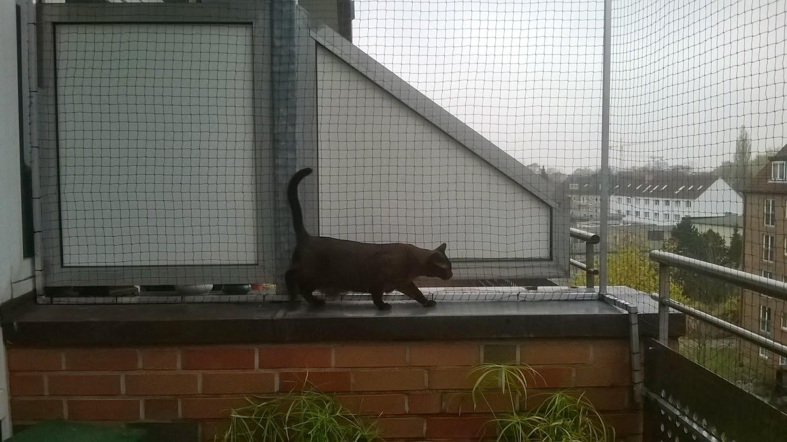 katzensicherer balkon ohne bohren