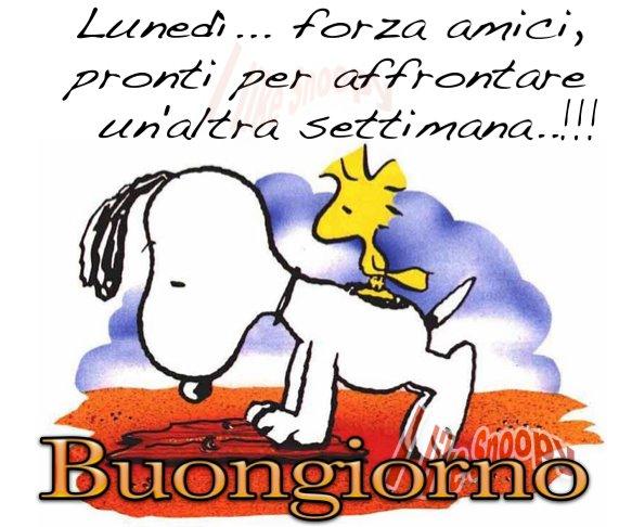 Buongiorno e buon luned divertenti e simpatici for Vignette buongiorno divertenti