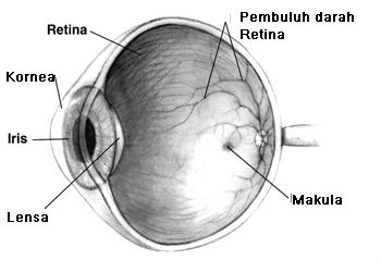 Pengertian mata, bagian, fungsi dan cara kerjanya