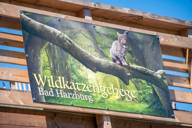 Wildkatzen-Walderlebnis und Wildkatzenstieg zum Wildkatzengehege Bad Harzburg 12
