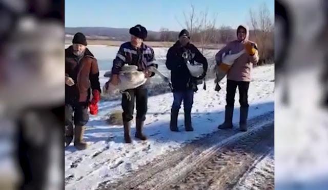 Минутка хороших новостей: жители Башкирии спасли четырёх лебедей