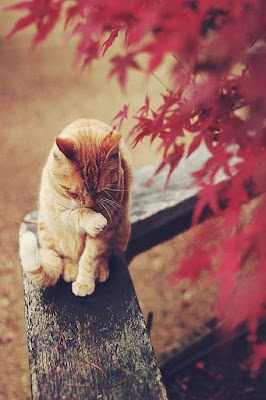 fall_inspiration_cat