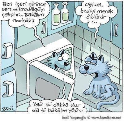 kediyi merak öldürür karikatür