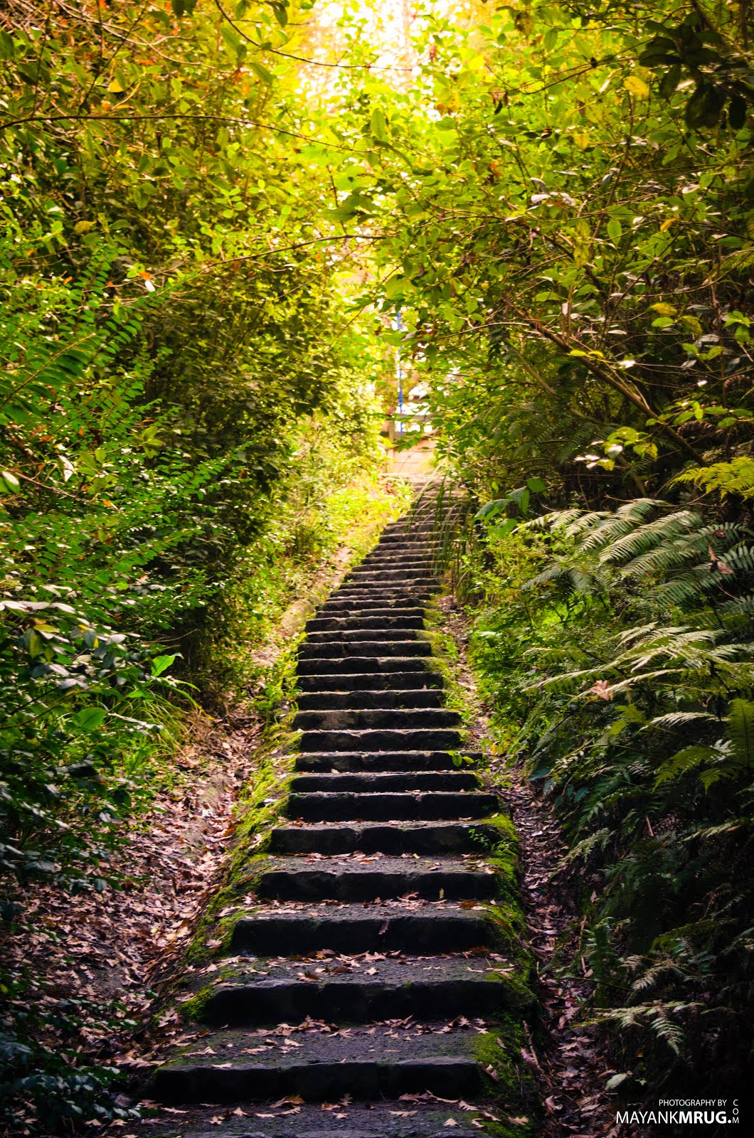 Steps to Paradise