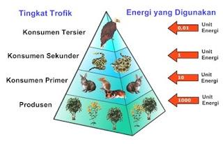 Piramida Makanan / Ekologi (Pengertian, Jenis, Contoh)
