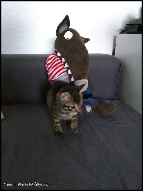 blog famille loup auzou chaton