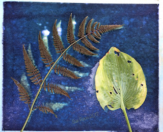Wet cyanotype_Sue Reno_Image 192