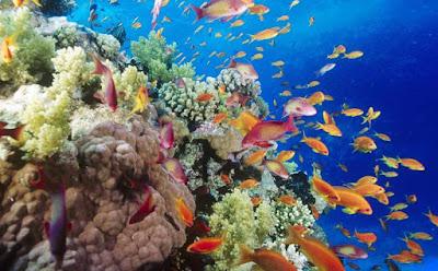 Los arrecifes