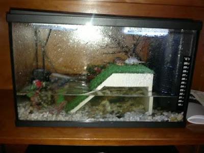tortugas-acuaticas-cautividad-cuidados-acuario-adecuado.