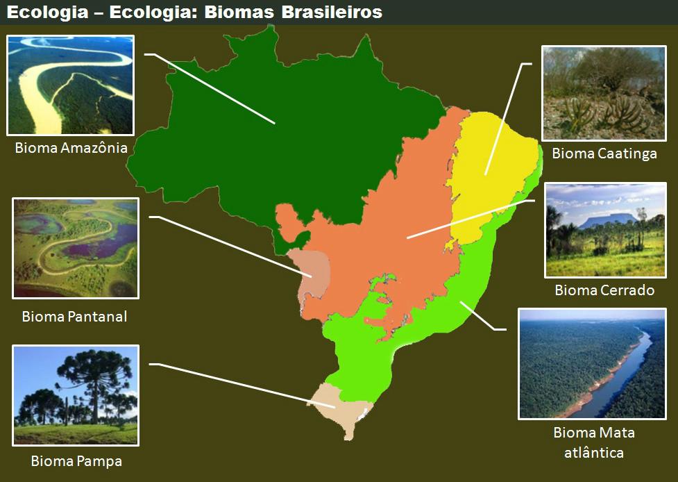 Resultado de imagem para biomas brasileiros