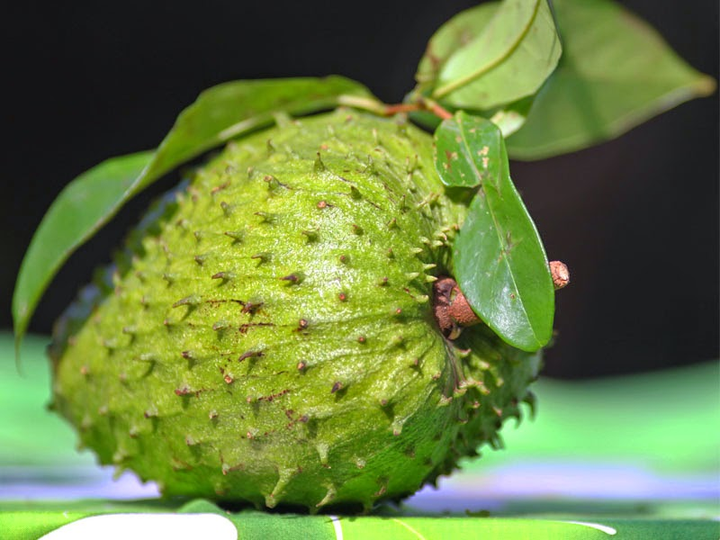 Health Benefits of soursop Fruits During Pregnant