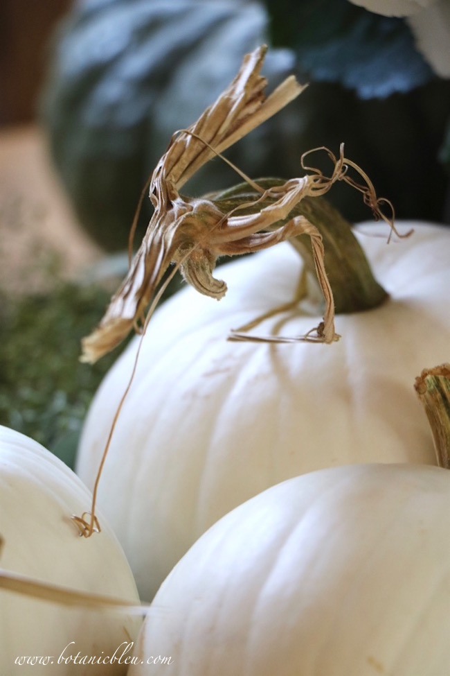 white-pumpkins-new-fall-traditions