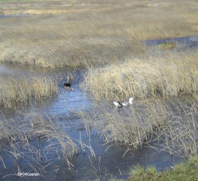 marsh, Patagonia