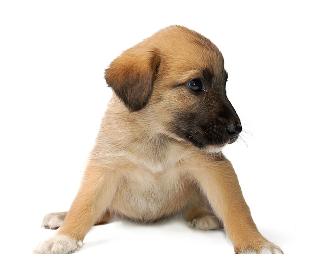 O que é preciso saber antes de adotar um pet?