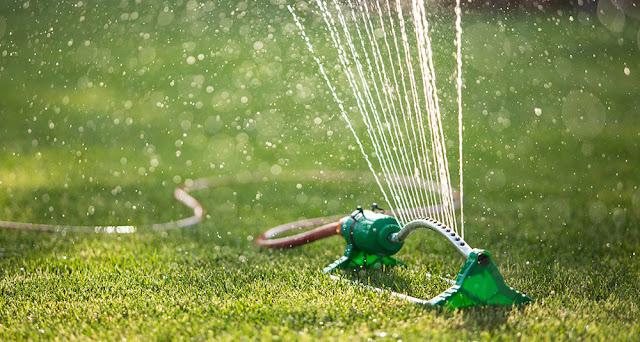 O czym należy pamiętać, aby móc się cieszyć pięknym trawnikiem?
