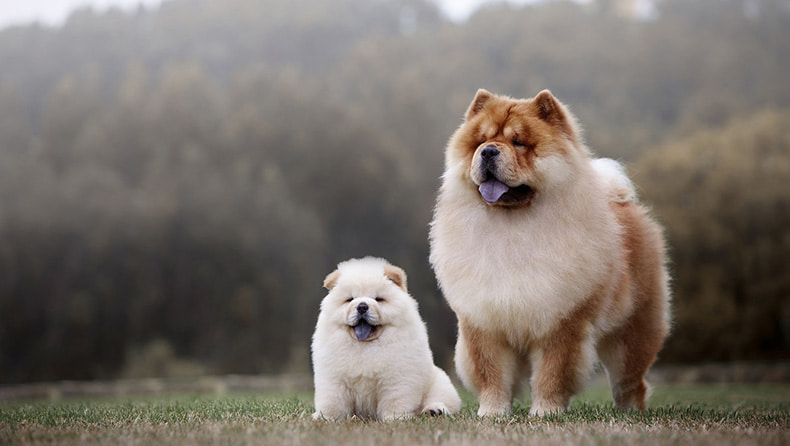 Самая дорогая собака цена