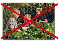 Δρακόντειος ευρωπαϊκός νόμος για τους σπόρους (plant reproductive material law) – Τι συμβαίνει;