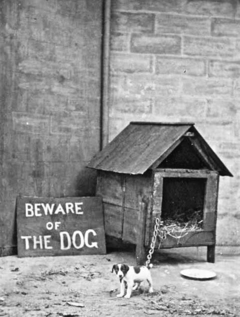 Beware of the dog - fun