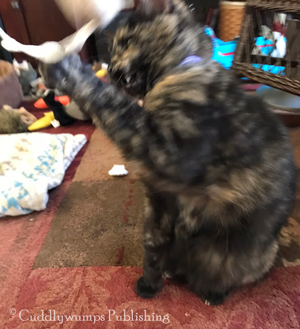 More blurry tortie action with Real Cat Paisley