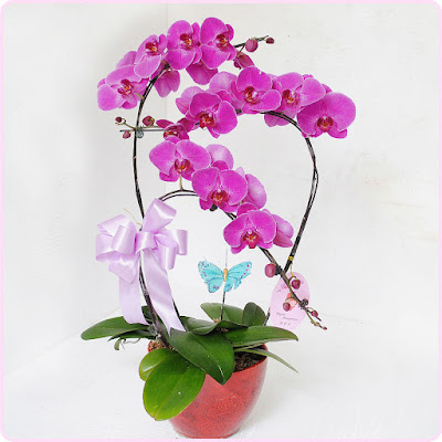 hoa sinh nhat mẹ dep