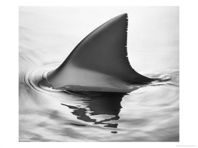 ¿Es afrodisiaco comer aleta de tiburón?