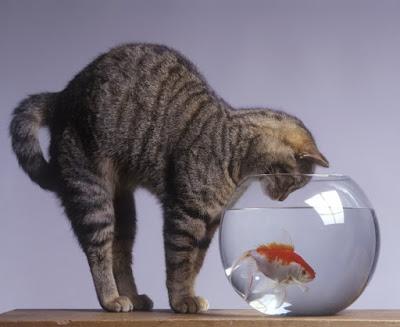 gatto e comportamento efficace hover_share