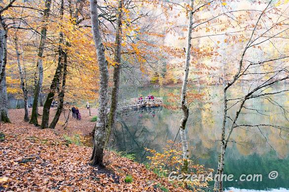 yerleri kaplayan kahverengi yapraklar ve Büyükgöl, Yedigöller Milli Parkı Bolu