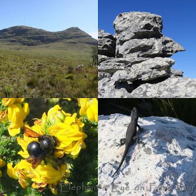 Silvermine Steenberg Ridge