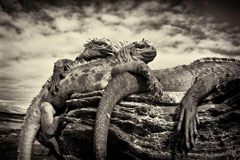 Resultado de imagen para scott stulberg fotografo