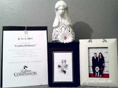 Carma Poodale's ashes, pawprint, poodle statue, photo  and crown she wore last