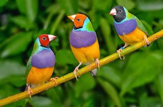 Tips Jitu Sebelum Membeli Burung Agar Tidak Menyesal