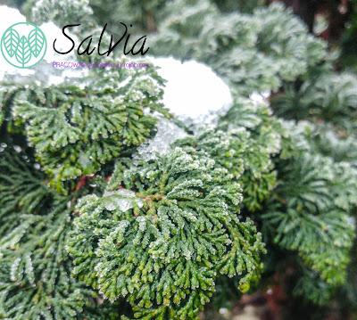 Zima dla roślin - czy drzewa zapadają w sen zimowy?