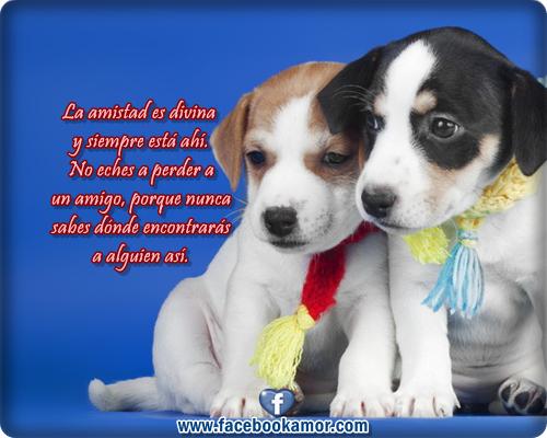 Perros Con Frases Lindas Imagui