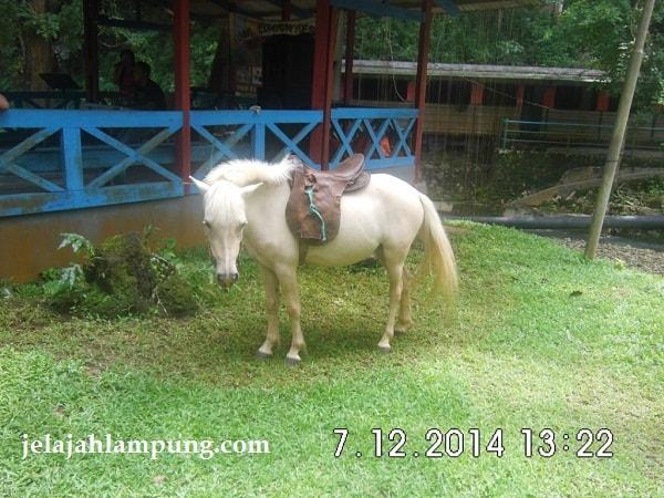sewa kuda bumi kedaton